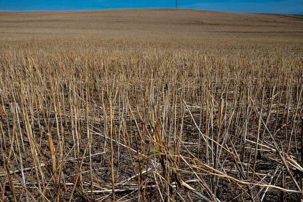 Des champs coupés et asséchés - Photo d'illustration