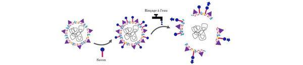 Les tensioactifs du savon se fixent sur l'enveloppe du virus et agissent comme des pieds-de-biche, déchirant la membrane, qui se disperse au rinçage.