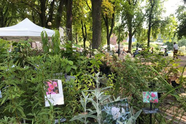 """Pour cette 16ème édition de """"Pépinière en vert"""" à Nancy, horticulteurs, pépiniéristes, maraîchers et autres amoureux des plantes se sont réunis les 4 et 5 septembre 2021."""