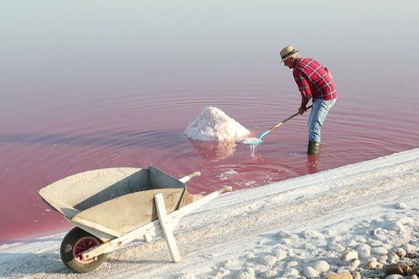 Dans les Salins d'Aigues mortes, en plein coeur de la Camargue, les sauniers ramassent la fleur de sel à la main.