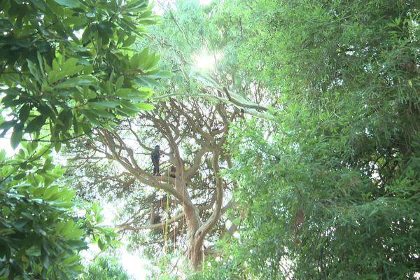 Respecter l'architecture de l'arbre avant toute intervention, telle est la clé.