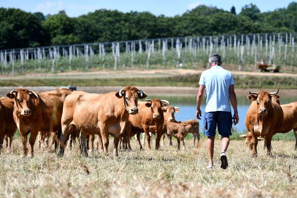 Selon l'enquête de l'Insee, les ménages agricoles disposent des revenus agricoles les plus faibles dans les territoires d'élevage.