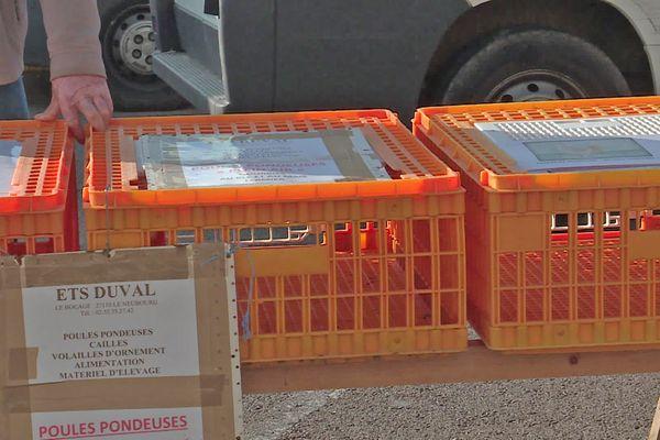 Les cages vides d'un des éleveurs du marché du Neubourg (Eure) le 31 mars 2021