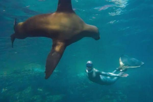 """Stéphane Tourreau """"parle"""" avec les dauphins"""