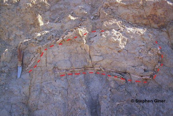 L'emplacement du fossile à Barjols