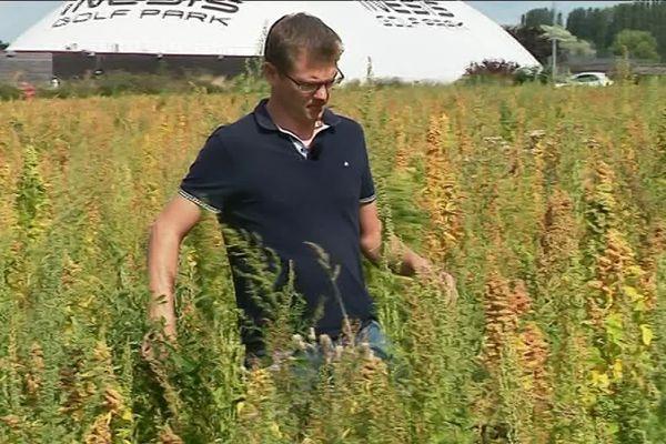 Ce maraîcher s'est lancé dans la culture du quinoa il y a 2 ans.