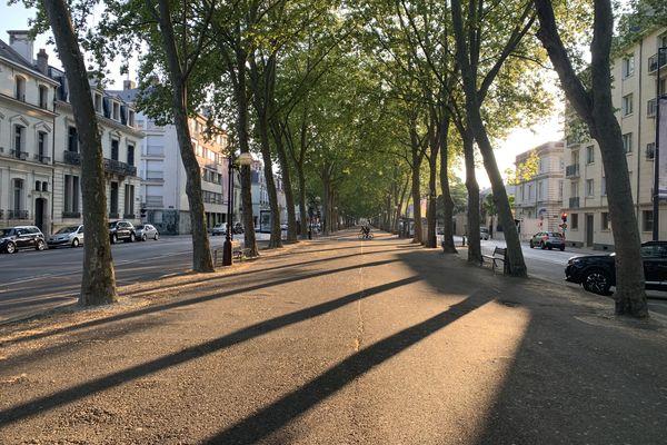 Les platanes remarquables du boulevard Béranger à Tours.