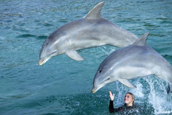 Le conseil d'Etat maintient l'interdiction de reproduction des dauphins en captivité, comme à Port Saint-Père