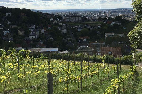 La vigne de Rouen, sur le coteau du Mont-Fortin