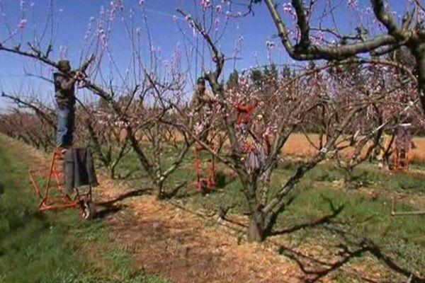 Depuis 2009, les arboriculteurs du Gard ont remboursé la moitié des sommes demandées. Restent à trouver 5 millions d'euros.