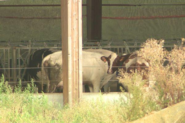 La future ferme aux 1000 vaches à Houlbec-Cocherel