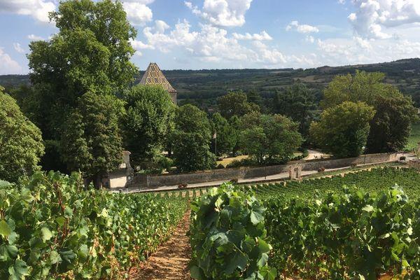 Le vignoble de Santenay, en Côte-d'Or