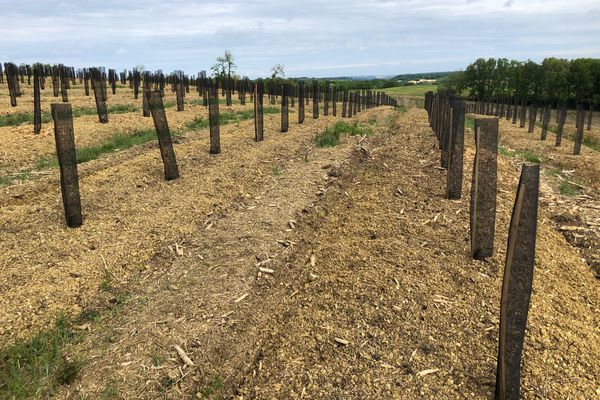 A Castin, dans le Gers, 2.000 plants d'arbres sont suivis par des chercheurs pour voir comment ils vont résister au réchauffement climatique.