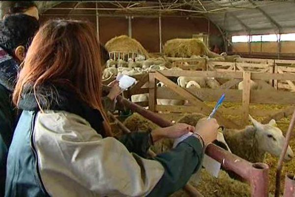 Les élèves du lycée agricole de Bourges-Le Subray apprennent à évaluer le bétail.
