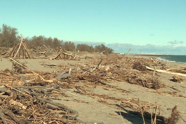 Des tonnes de bois ont été charriées par les fleuves côtiers en crue en janvier 2020, lors de la tempête Gloria.