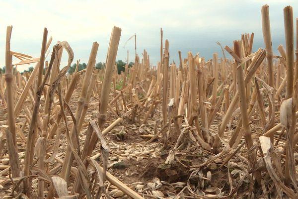 Cet été la sécheresse a profondément impacté les agriculteurs du département.