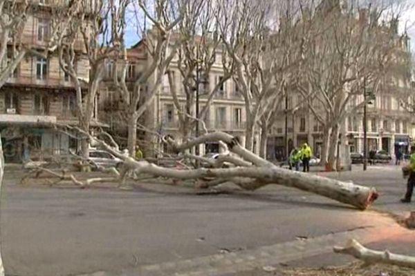Béziers (Hérault) - 37 platanes des allées Paul Riquet vont être abattus - 25 février 2013.