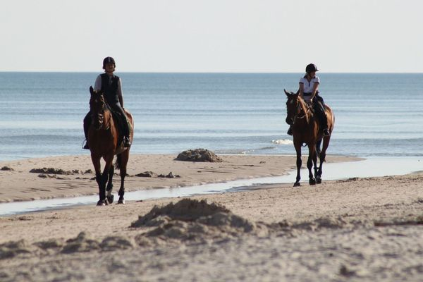 Les randonnées à cheval et le tourisme équestres ont été durement touchés