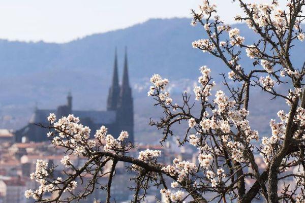 Le printemps est en avance cette année en Auvergne et les arbres se parent de fleurs à Clermont-Ferrand.