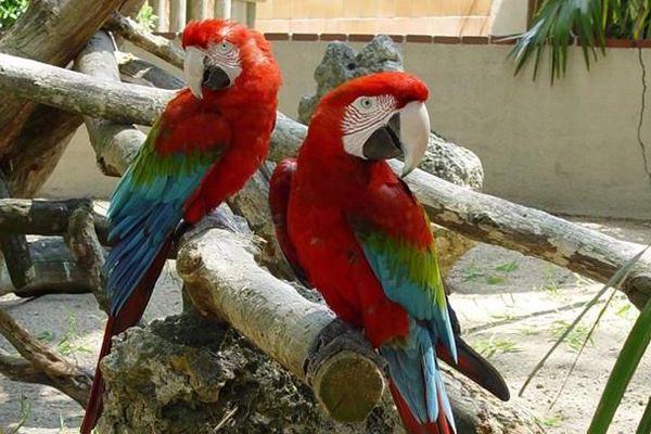 Un des perroquets du zoo a disparu.