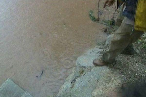 Les rives du Gapeau