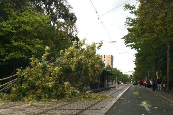 Un arbre s'est abattu sur la ligne A du tramway d'Orléans, lundi 24 août, en début d'après-midi.
