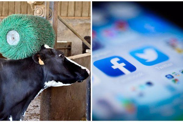 Les agriculteurs veulent faire partager leur quotidien sur les réseaux sociaux