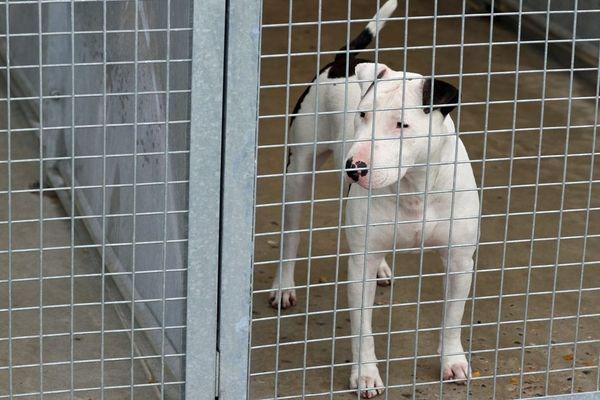 La justice doit statuer plus rapidement sur les cas de maltraitance animale,  selon une pétition. Image d'illustration.