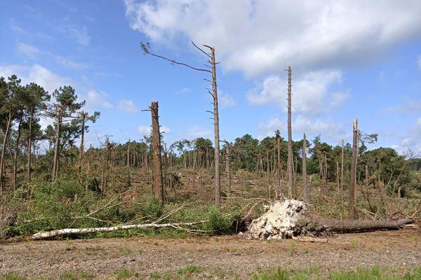 Plus de 10 000 hectares de forêts du massif du Bourgueillois ont été touchés par les intempéries.