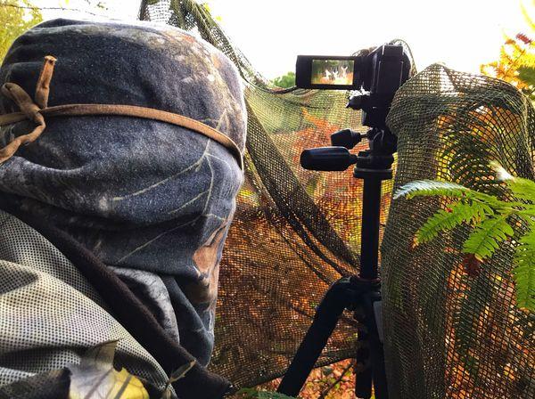 Caché dans la végétation, l'affût permet l'observation en toute discrétion de la faune sauvage