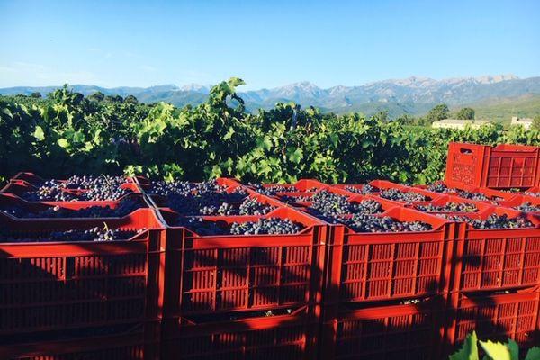 Situé sur la commune de Ghisonaccia, le domaine est composé de 40 hectares de vignes.