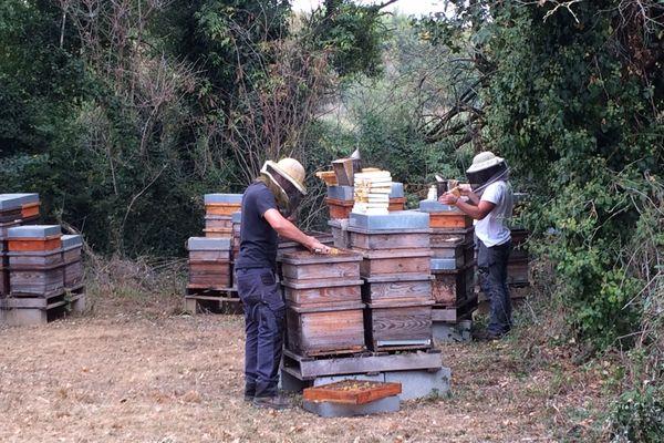 Récolte de miel d'été, en Vendée, le 15 septembre 2020