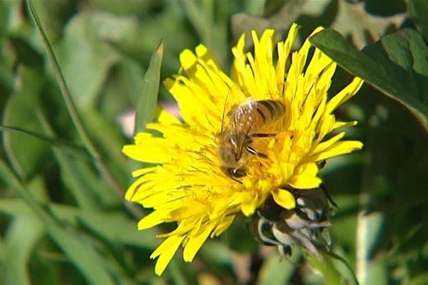 Les abeilles sont réputées pour être de grandes travailleuses.