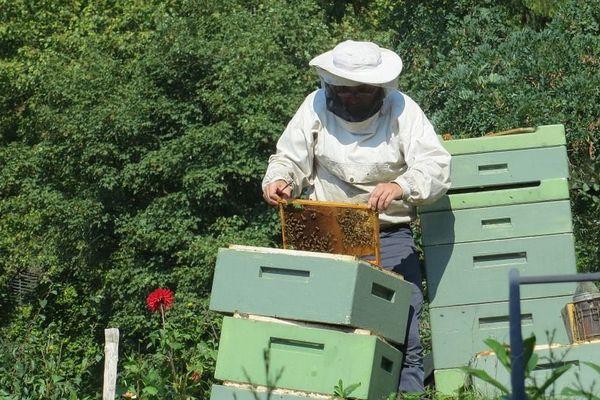 Malgré des conditions climatiques difficiles, toute la récolte de miel n'est pas perdue pour les apiculteurs du Limousin.