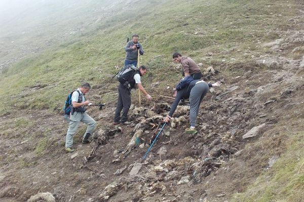 Les cadavres de 120 brebis ont été découverts non loin de Cauterets (65).