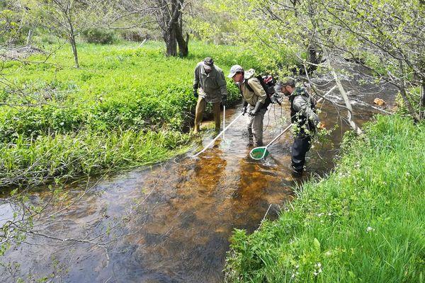 A Tence (Haute-Loire), un hydrobiologiste évalue les conséquences d'un déversement de lisier dans un cours d'eau.