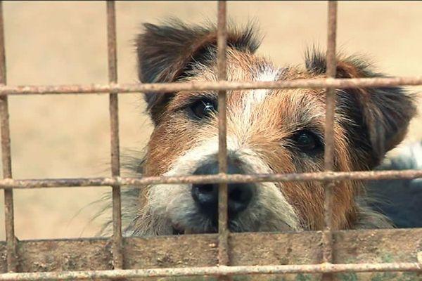 Ce chien est à l'adoption à la SPA de l'Eure à Evreux