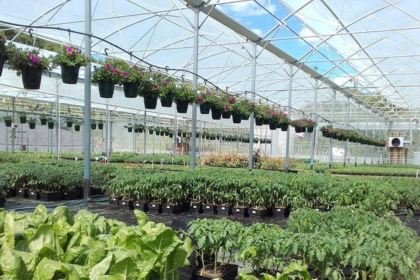 Philippe Bleys a démarré son entreprise de plants potagers et aromatiques en 1987 avec un tunnel, aujourd'hui il a 4500 m2 de serres
