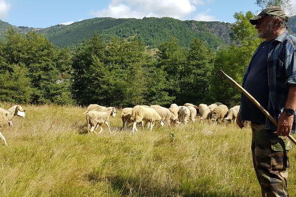 Joseph Bernadac et son troupeau à Auzat (Ariège)