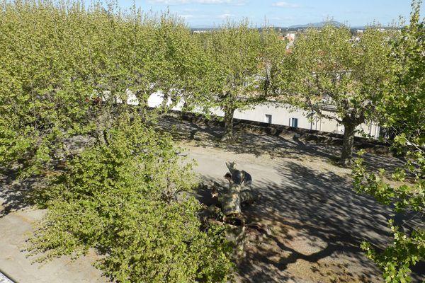 Les 46 platanes ne représentent qu'une minorité des arbres des allées basses.