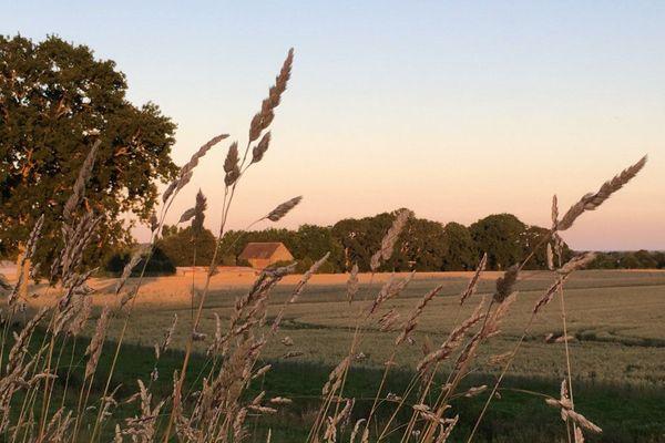 Champ de céréales à Châteaugiron en Ille-et-Vilaine