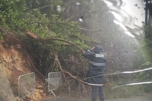 Alpes-Maritimes : Un arbre est tombé à Vallauris sur la chaussée