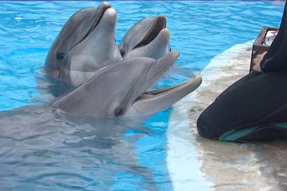Selon One Voice, deux dauphins du parc Astérix sont déjà au delphinarium Kolmårdens en Suède