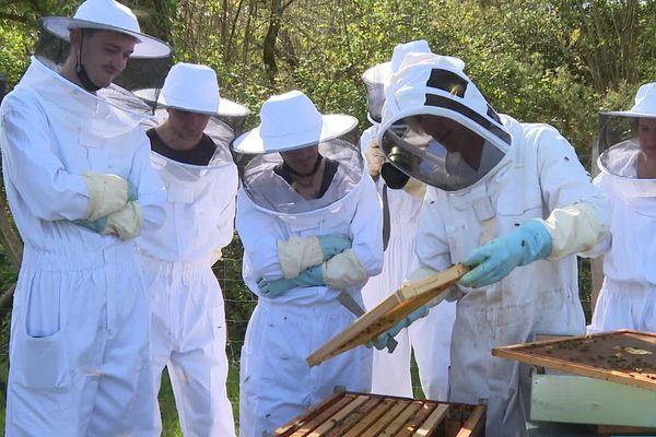 Ces cuisiniers découvrent tout le processus de fabrication du miel