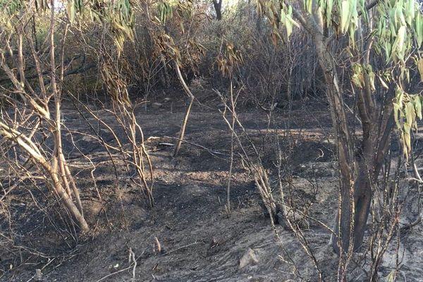 Pont du Gard - un incendie a brûlé plusieurs hectares de garrigue - 17 juillet 2019.