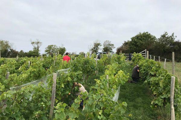 François Lecourt a planté 200 pieds de vignes en 2014 afin de mener des expérimentations