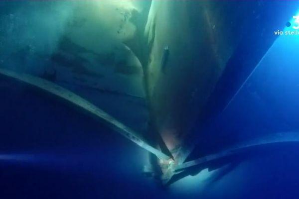 Collision au large du cap Corse : les premières images sous-marines