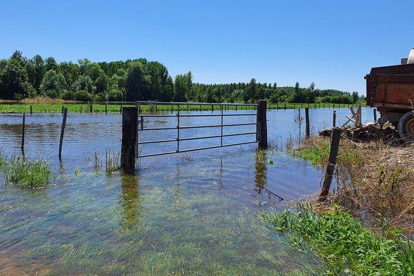 Autour de l'exploitation de Laurent Champenois, pâtures et parcelle de soja sont complètement submergés.