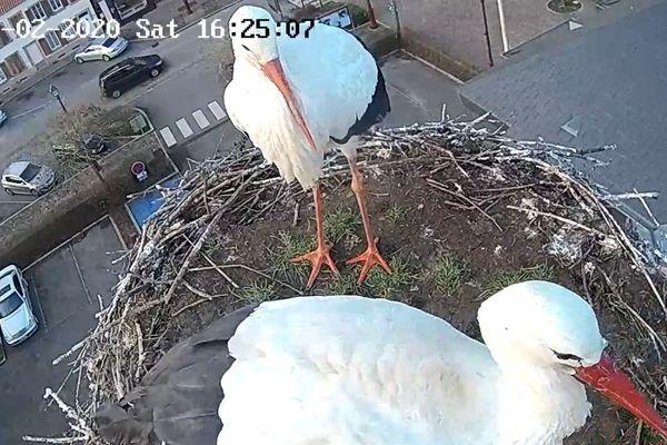 Il est l'heure de nettoyer le nid...