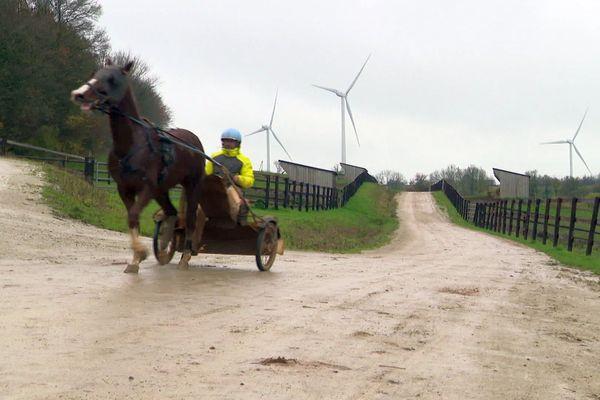 Les chevaux buvaient-ils l'électricité des éoliennes ?